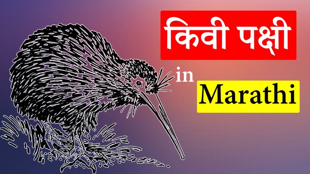 Biography of Kiwi Bird in Marathi (किवी पक्षी)