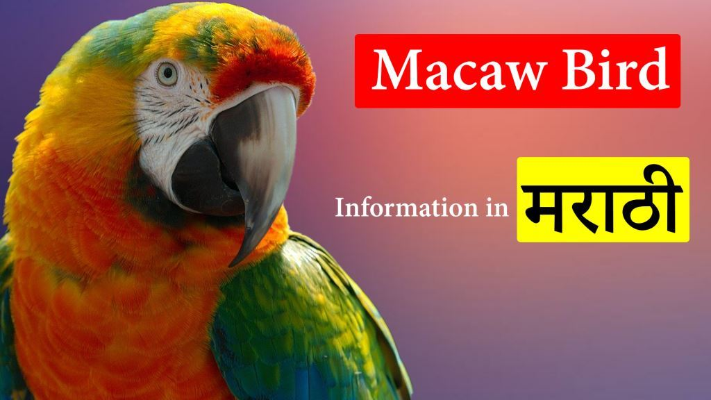 Biography of Macaw Bird in Marathi