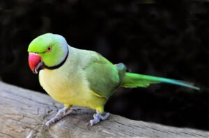 पोपट पक्षी माहिती मराठी – Popat Pakshi Mahiti Marathi
