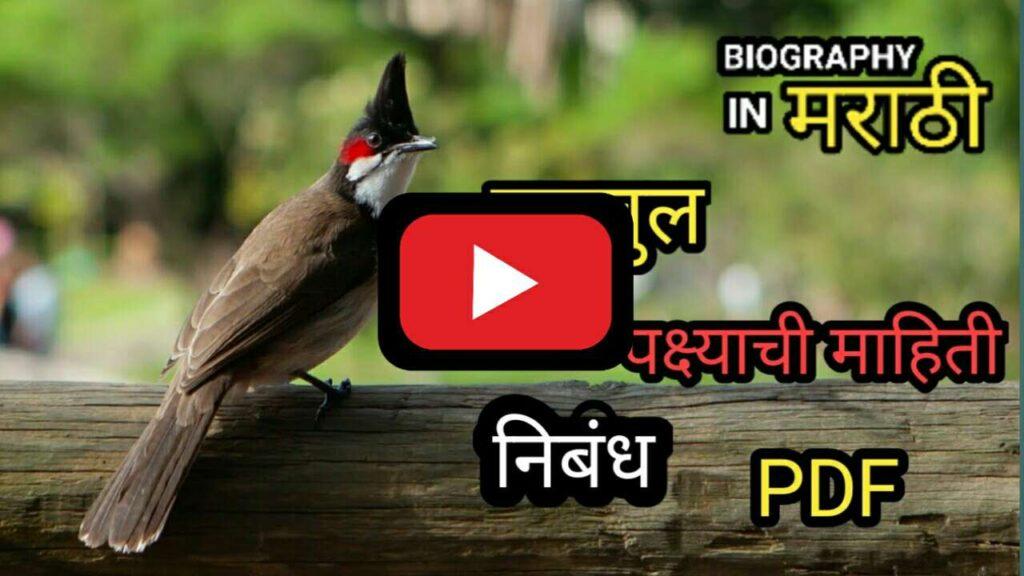 Bulbul Information in Marathi