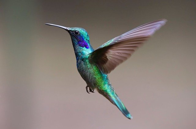 Hummingbird Information in Marathi