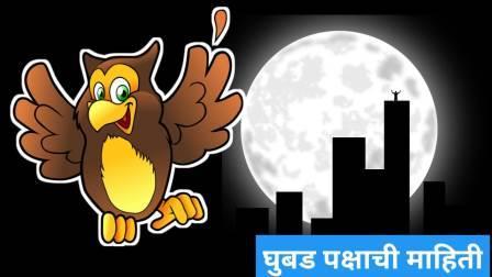 Owl Information in Marathi